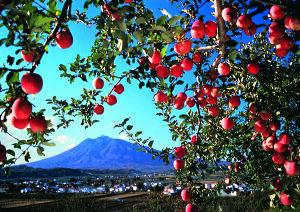 りんごと岩木山.jpg