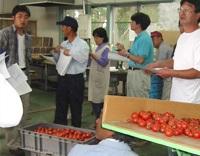 八戸市農協トマト部会