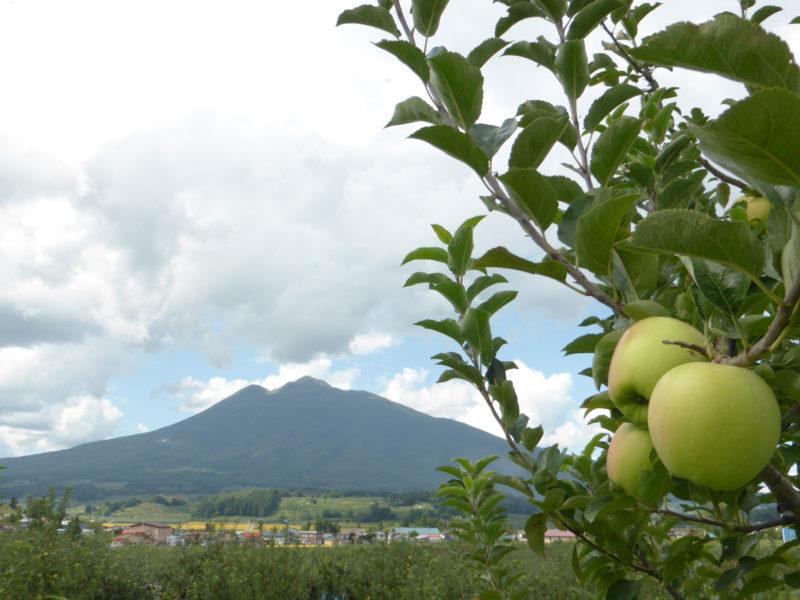 黄色りんご