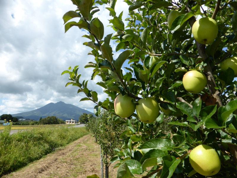 黄色りんごの園地
