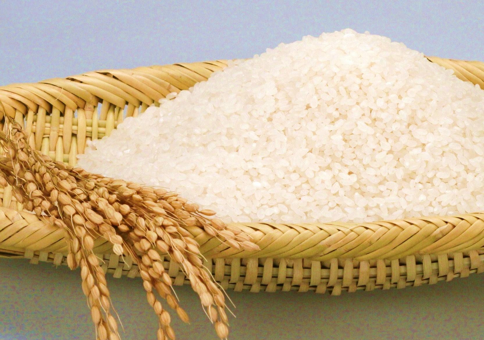2015年1月 旬の食材 あおもり米新品種・青天の霹靂