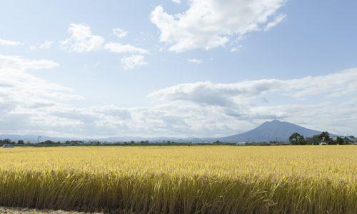 青森県の米づくり