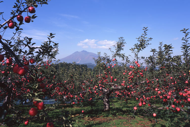 青森県のりんご生産