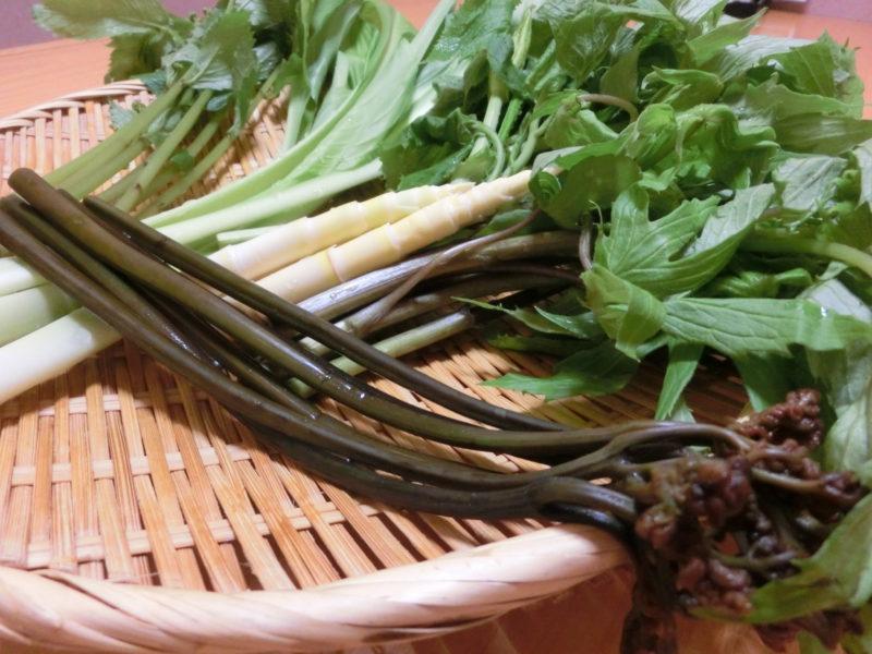 春の味覚「山菜」ぜんまい・わらび・たけのこ・ミズ・うるい・しどけなど