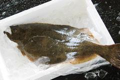 あおもりご当地食めぐり 奥津軽食のエリア 鰺ヶ沢ヒラメのヅケ丼 鰺ヶ沢町を代表する魚「ヒラメ」
