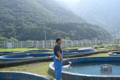 あおもりご当地食めぐり 奥津軽食のエリア 鰺ヶ沢イトウ料理 イトウの養殖場