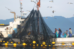 あおもりご当地食めぐり 奥津軽食のエリア 深浦マグロステーキ丼 深浦マグロ大型定置網漁