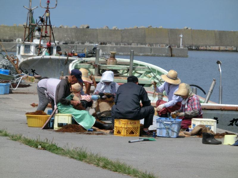 エゴノリ漁から加工までの手間ひま