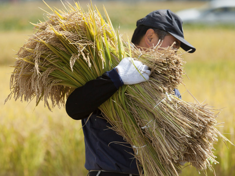 青森県の米作り