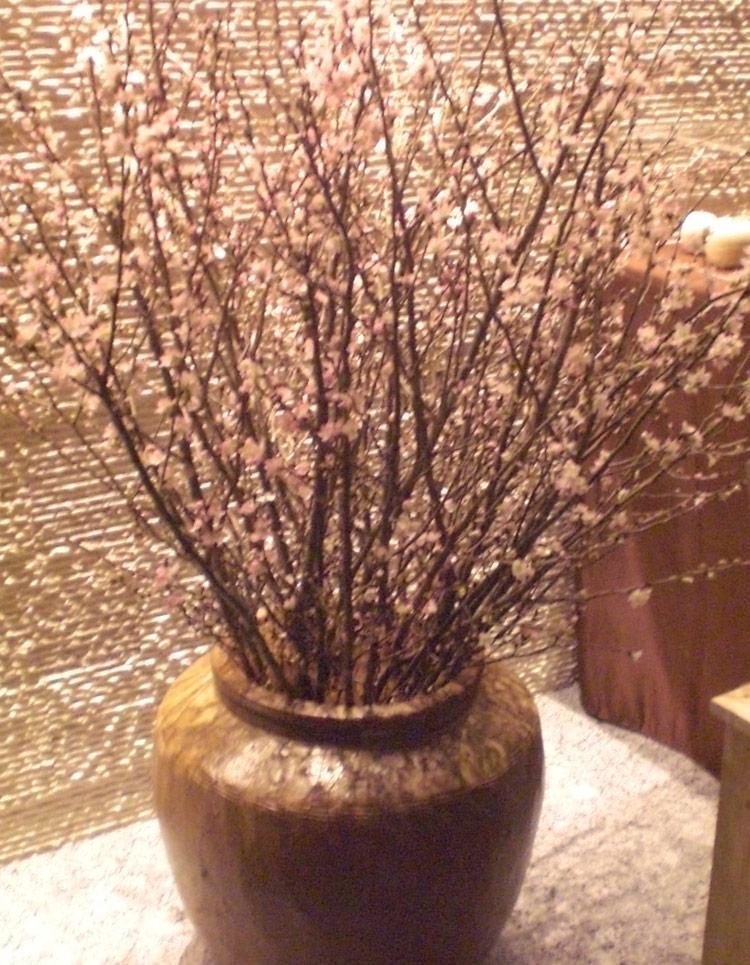 啓翁桜は室内での鑑賞におすすめ