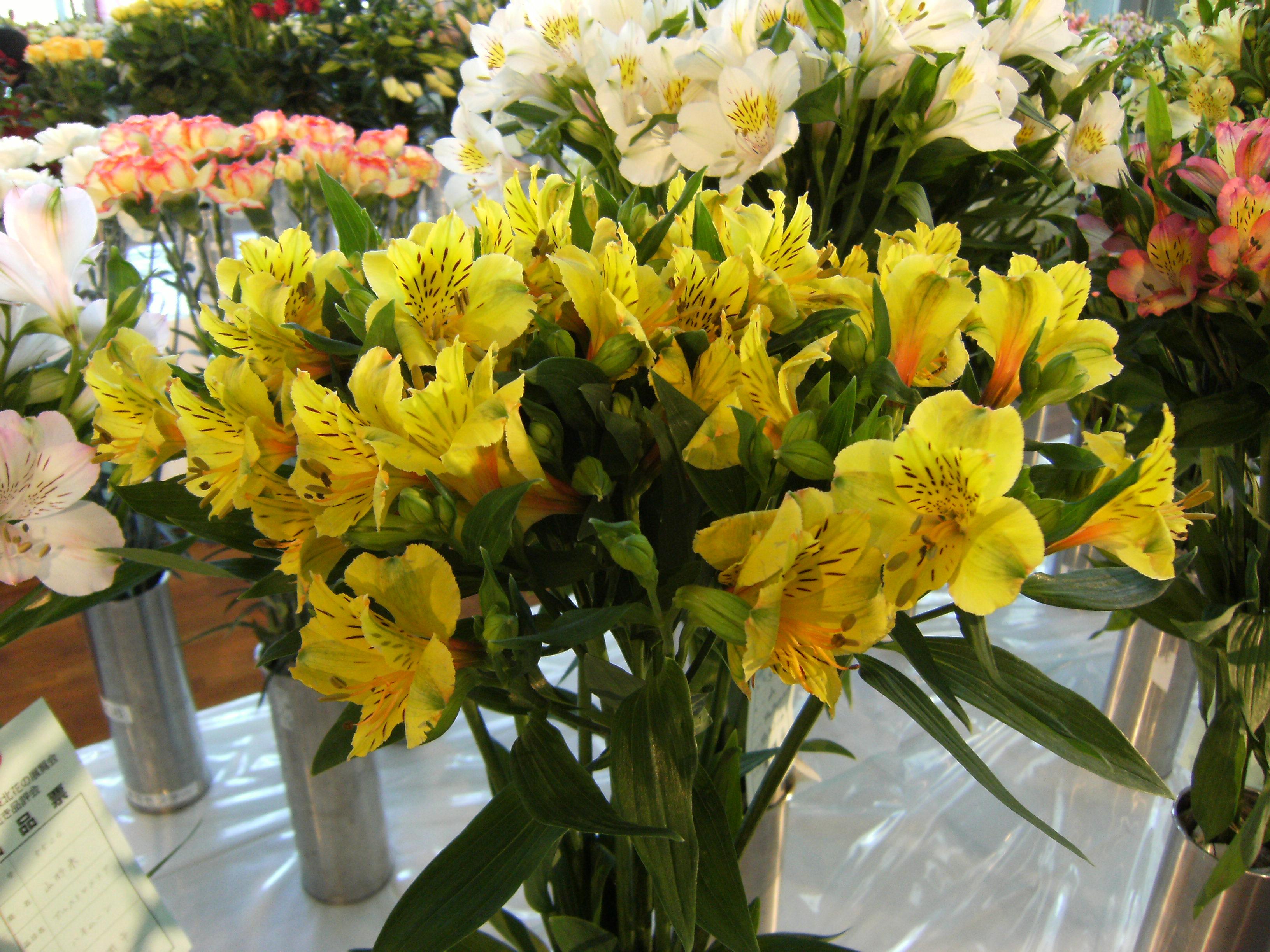 青森県の花づくり