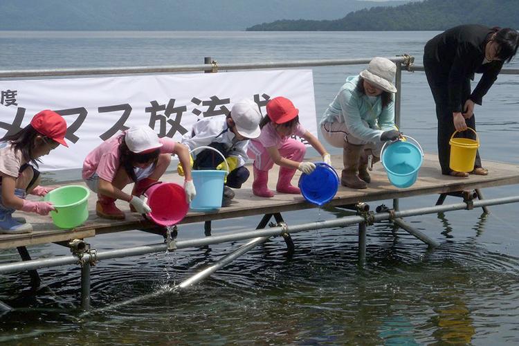 十和田湖のひめます 稚魚放流風景