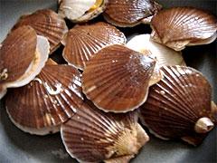 陸奥湾のほたて貝