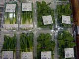 JA産直プラザ 珍しい野菜も(にんにくの芽、アイスプラント)