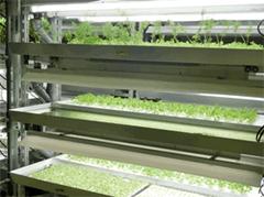 農薬を使用しない水耕栽培