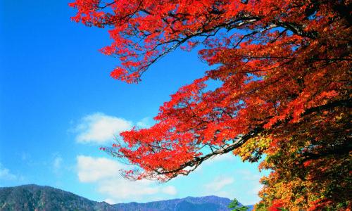 青森の紅葉