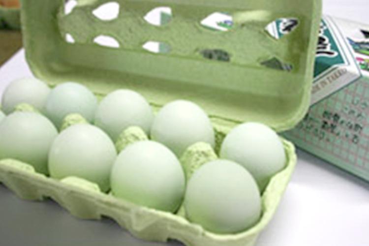 あすなろ卵鶏の卵