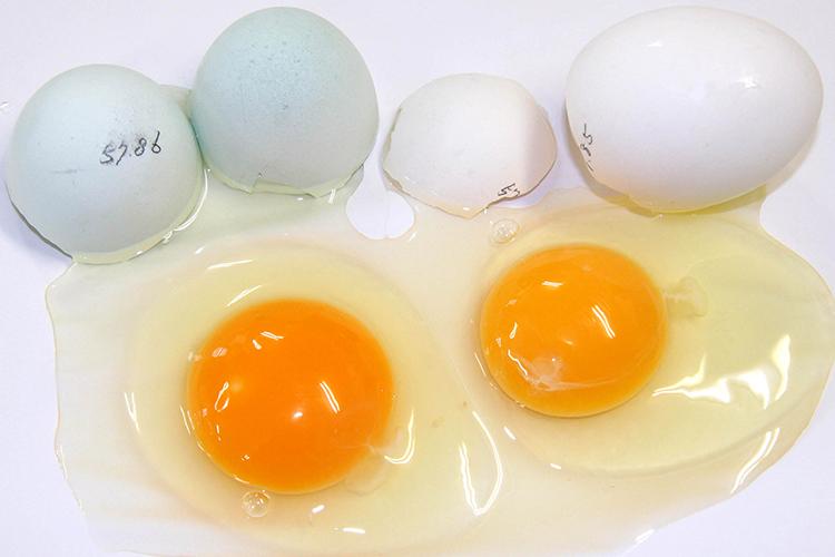 あすなろ卵鶏の卵 生卵