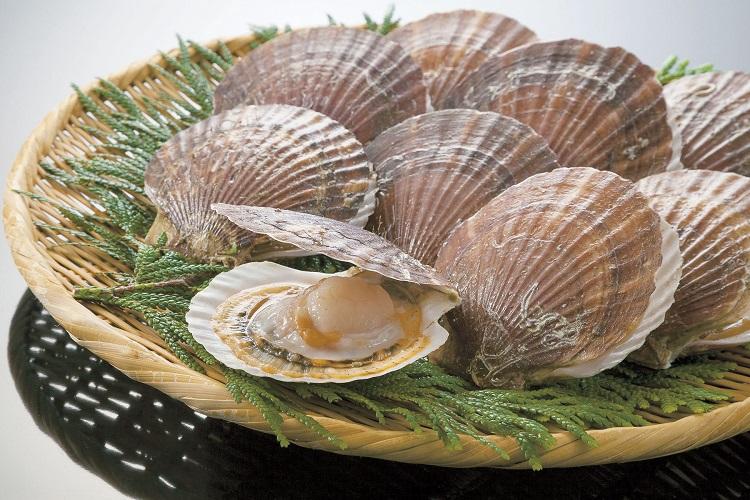 貝類・海藻