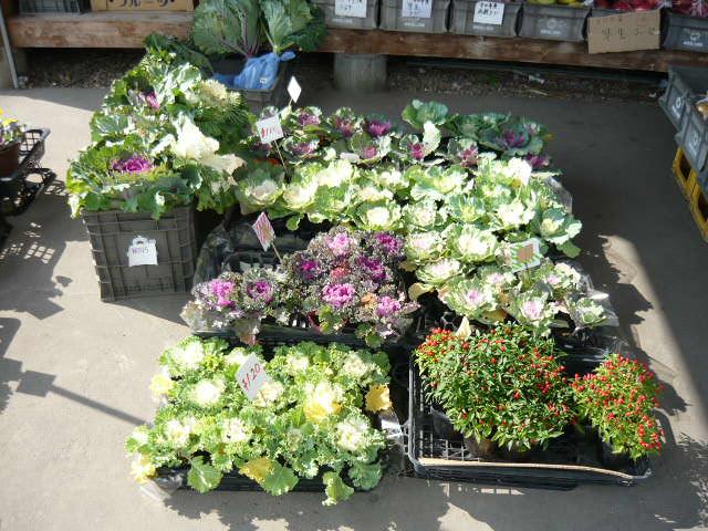 JA津軽みらい「尾上特産物直売所」素敵な花がお出迎え