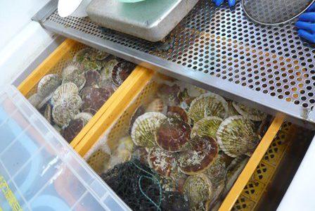 のへじ活き活き常夜燈市場 生け簀の中には新鮮な魚貝類が!