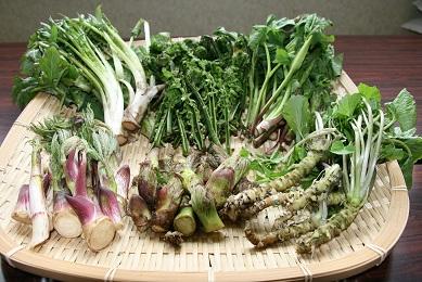 白神の山々で採れる季節の山菜