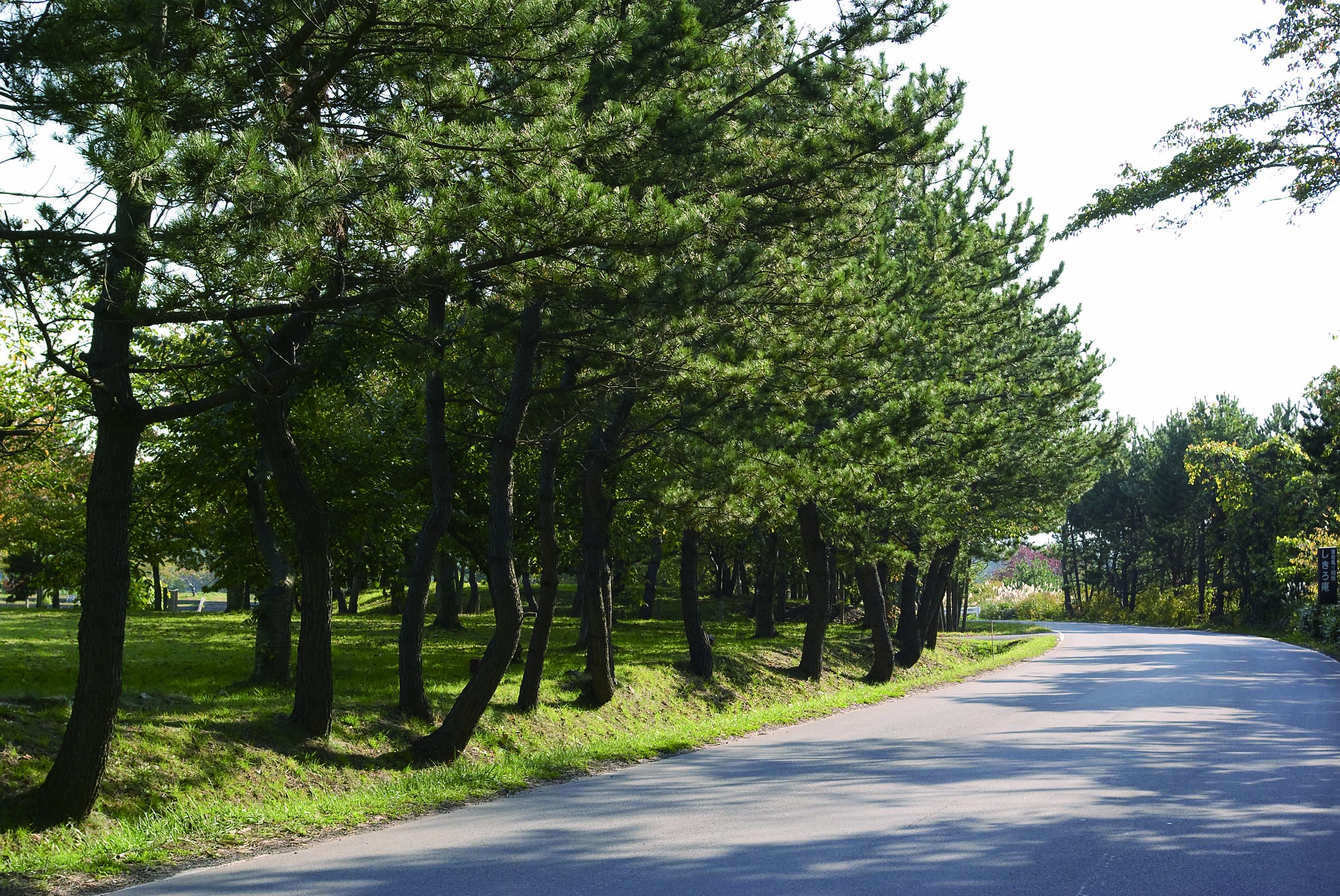 屏風山の防風林