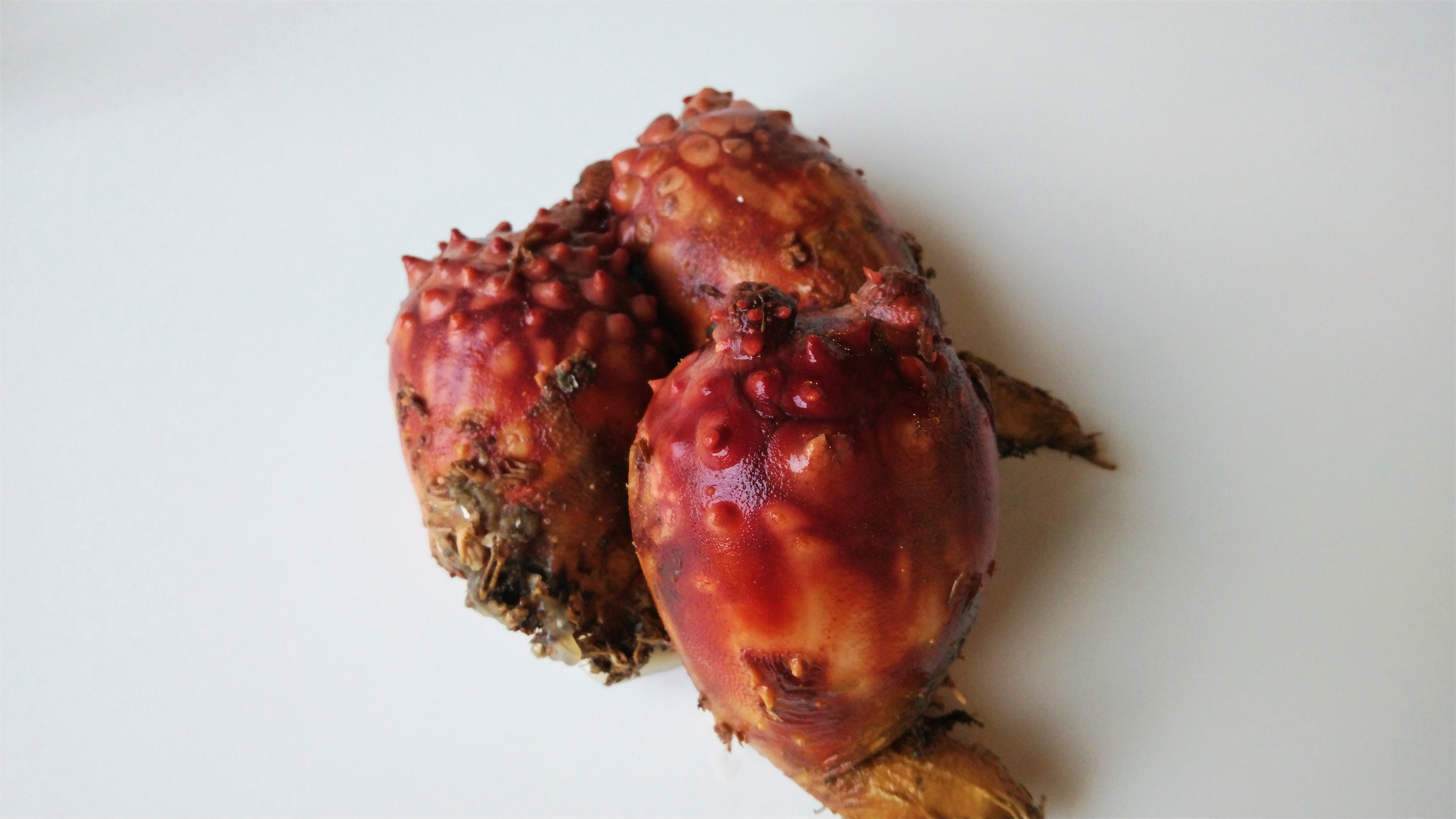 旬の食材2018年6月号 初夏の珍味「ホヤ」