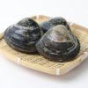 冬が旬「ほっき貝」
