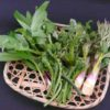 長い冬に終わりを告げ、待っていたのは!青森県で採れる「春の山菜」たち!