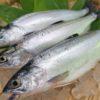 十和田湖増殖漁業協同組合と「十和田湖ひめます」