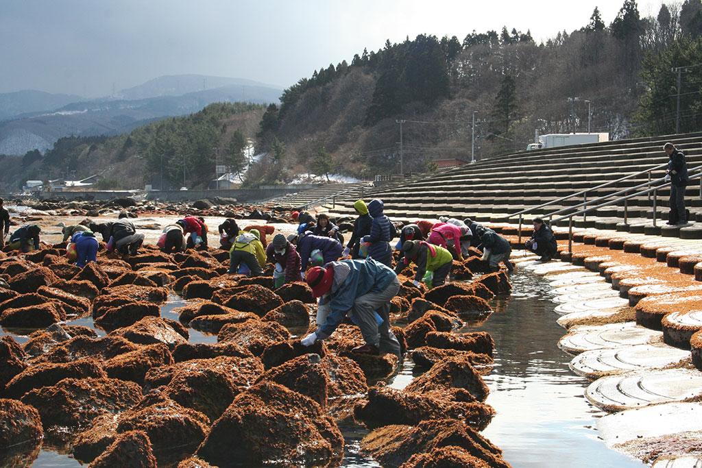布海苔採り体験ツアーの様子