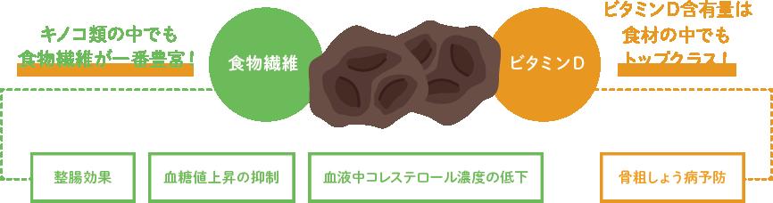 キクラゲの優れた栄養価 青森キクラゲ