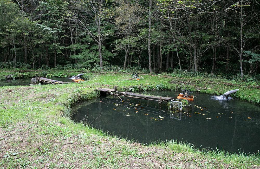 「青い森紅くれないサーモン」の養殖場
