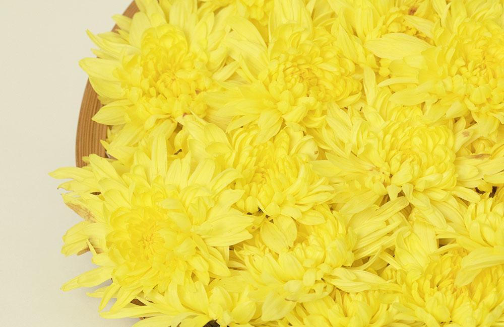 阿房宮の鮮やかな黄色い花びら
