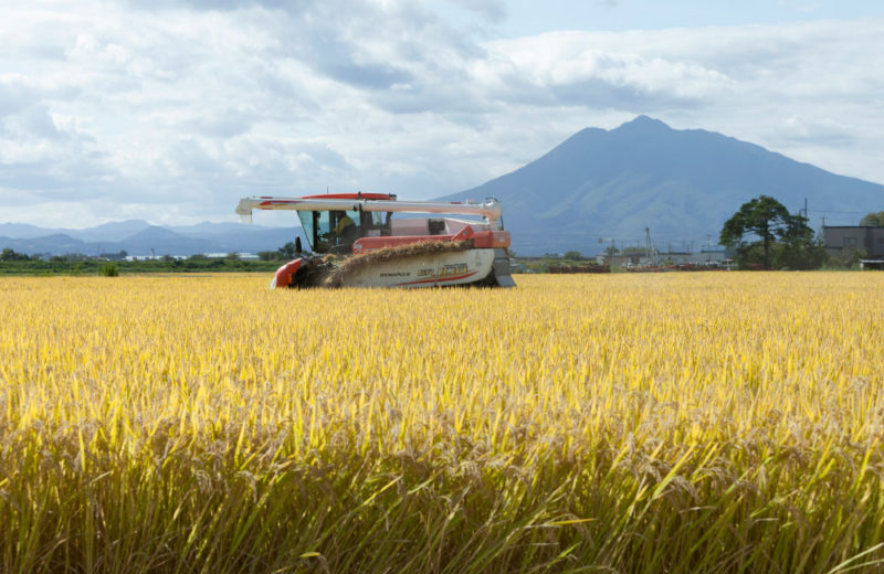 青天の霹靂 農作業風景